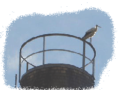 Storch03.gif